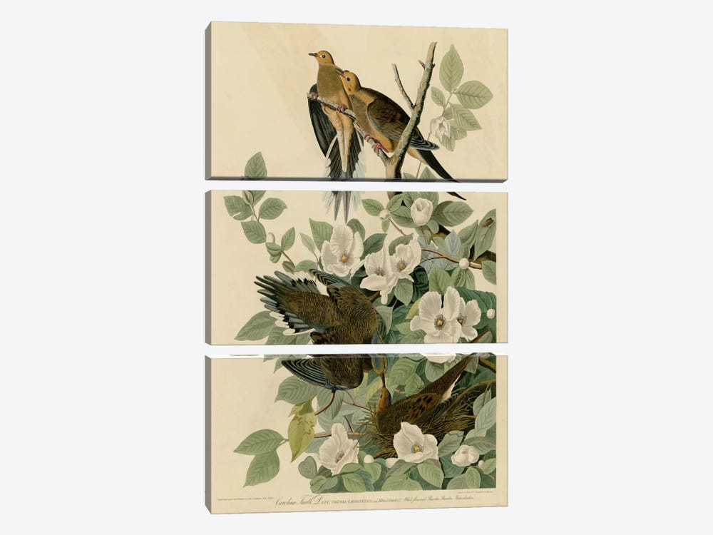 Carolina Turtledove by Vintage Apple Collection 3-piece Canvas Artwork