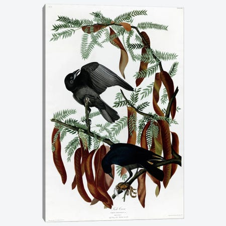 Fish Crow Canvas Print #VAC319} by Vintage Apple Collection Art Print