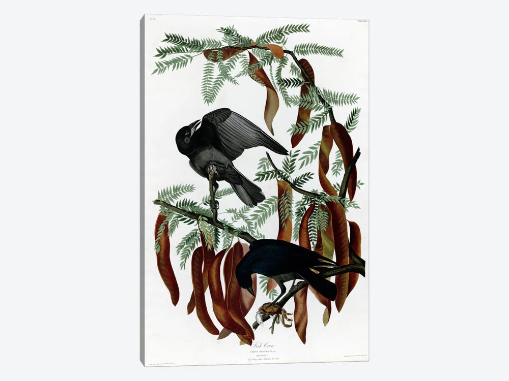 Fish Crow by Vintage Apple Collection 1-piece Canvas Art