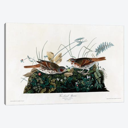 Fox Colored Sparrow Canvas Print #VAC322} by Vintage Apple Collection Canvas Art