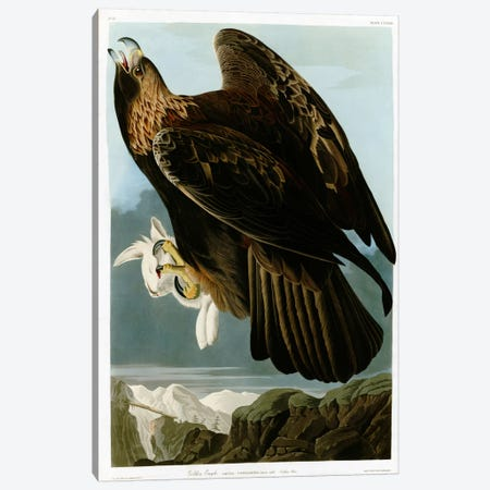 Golden Eagle Canvas Print #VAC325} by Vintage Apple Collection Canvas Art Print