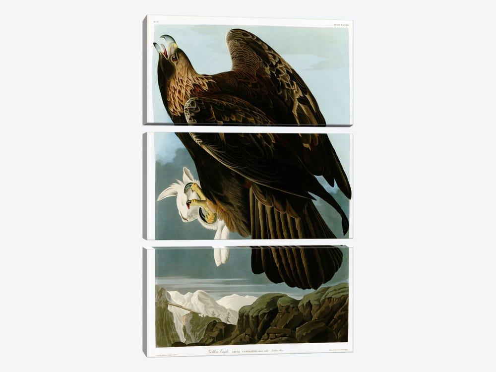 Golden Eagle by Vintage Apple Collection 3-piece Canvas Art Print