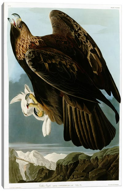 Golden Eagle Canvas Art Print