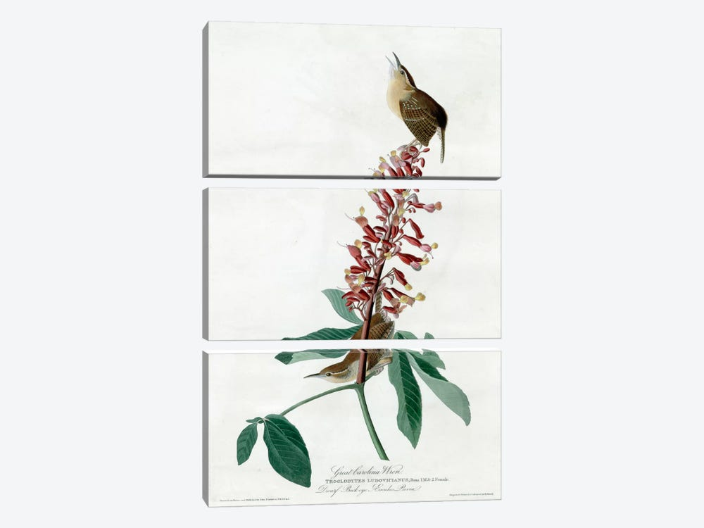 Great Carolina Wren by Vintage Apple Collection 3-piece Canvas Wall Art