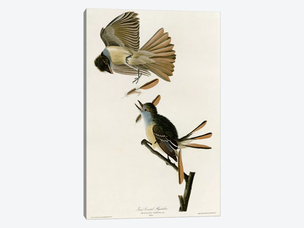 Great Crested Flycatcher by Vintage Apple Collection 1-piece Canvas Print