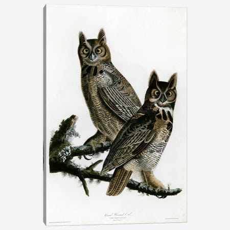 Great Horned Owl Canvas Print #VAC330} by Vintage Apple Collection Art Print