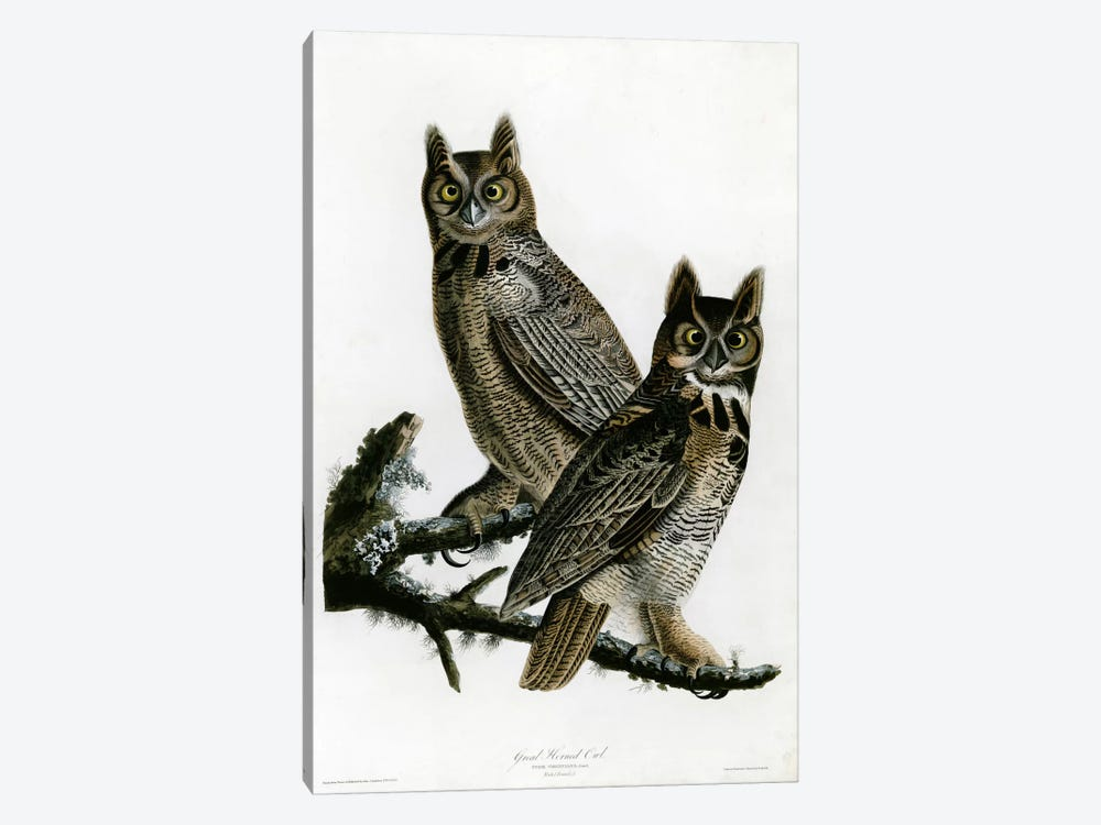Great Horned Owl by Vintage Apple Collection 1-piece Canvas Art Print