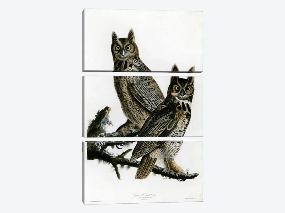 Great Horned Owl by Vintage Apple Collection 3-piece Art Print