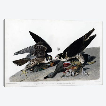 Greatfooted Hawk Canvas Print #VAC331} by Vintage Apple Collection Canvas Print