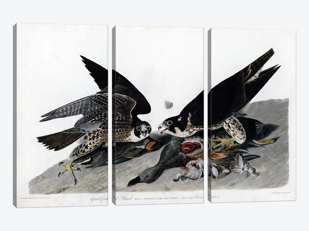 Greatfooted Hawk by Vintage Apple Collection 3-piece Canvas Wall Art
