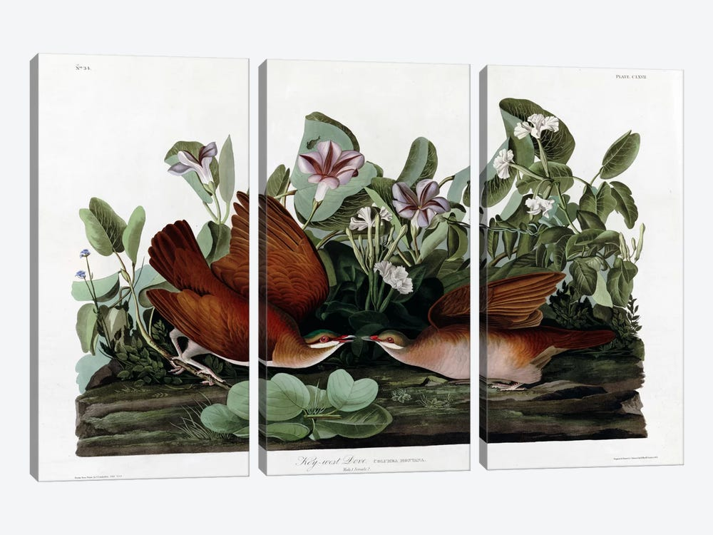 Key West Dove by Vintage Apple Collection 3-piece Canvas Wall Art