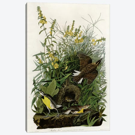 Meadow Lark Canvas Print #VAC342} by Vintage Apple Collection Canvas Art