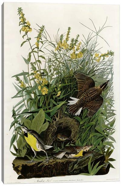 Meadow Lark Canvas Art Print
