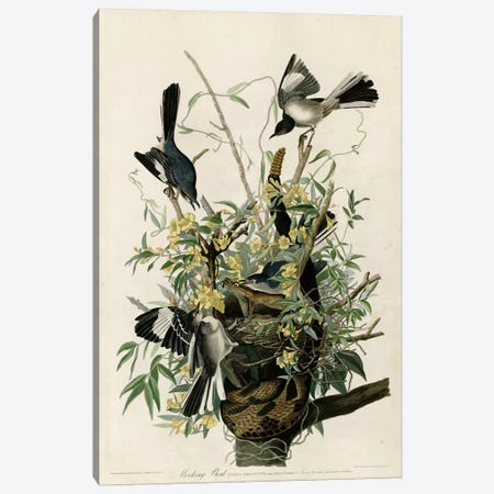 Mocking Bird Canvas Print #VAC344} by Vintage Apple Collection Art Print