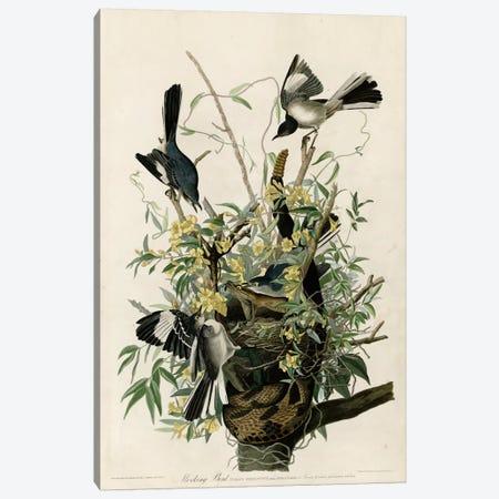 Mocking Bird Canvas Print #VAC344} by Vintage Apple Collection Art Print