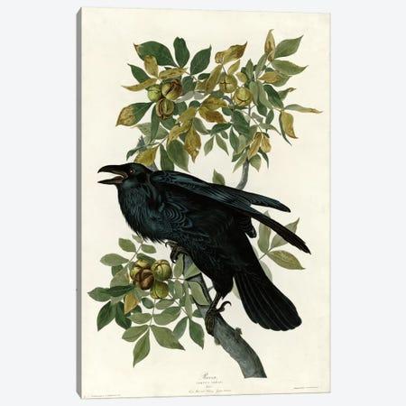 Raven Canvas Print #VAC357} by Vintage Apple Collection Canvas Artwork