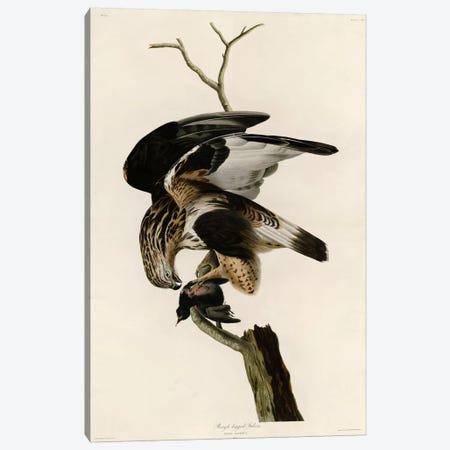 Rough Legged Falcon Canvas Print #VAC363} by Vintage Apple Collection Canvas Art