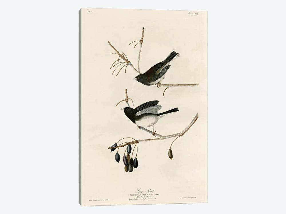 Snowbird by Vintage Apple Collection 1-piece Canvas Art Print
