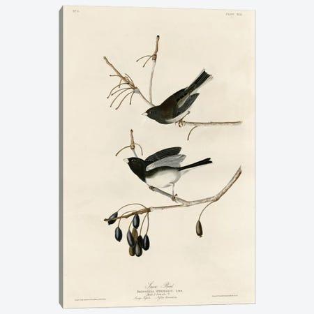 Snowbird Canvas Print #VAC370} by Vintage Apple Collection Art Print