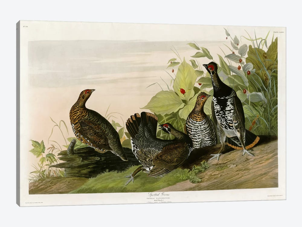 Spotted Grouse by Vintage Apple Collection 1-piece Canvas Art Print