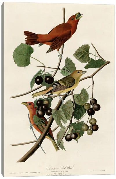 Summer Red Bird Canvas Print #VAC375
