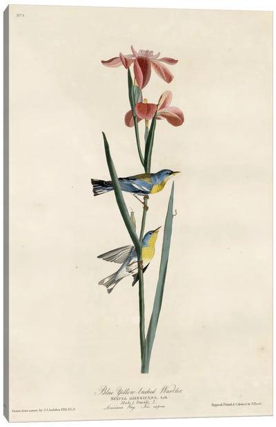 Yellowbackedwarbler Canvas Art Print