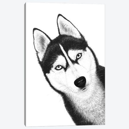 Black Husky Canvas Print #VAK112} by Valeriya Korenkova Canvas Artwork