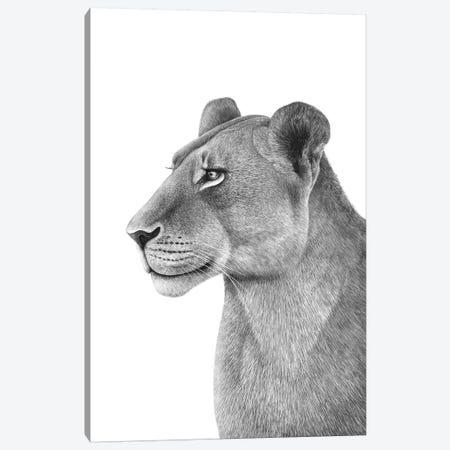 Lioness Canvas Print #VAK2} by Valeriya Korenkova Canvas Art