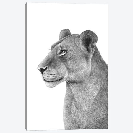 Lioness Canvas Print #VAK2} by Valeriya Korenkova Canvas Art