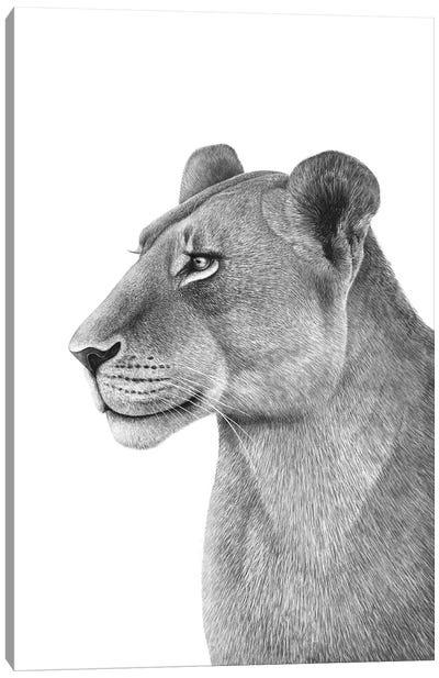 Lioness Canvas Art Print