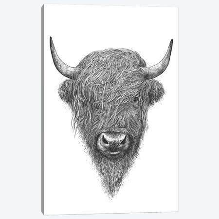 Highland Cow Canvas Print #VAK31} by Valeriya Korenkova Canvas Wall Art