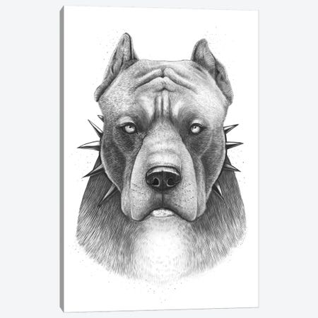 Pitbull Canvas Print #VAK46} by Valeriya Korenkova Canvas Wall Art