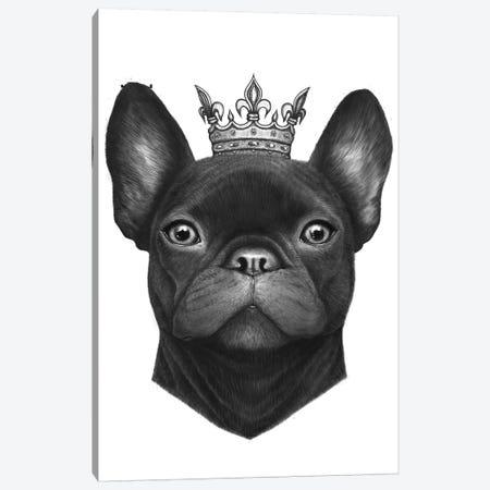 Queen French Bulldog Canvas Print #VAK51} by Valeriya Korenkova Canvas Art