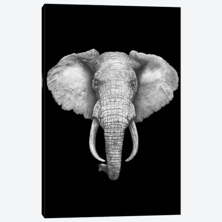 The Elephant On Black Canvas Print #VAK55} by Valeriya Korenkova Art Print