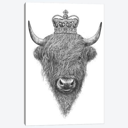 The King Highland Cow Canvas Print #VAK60} by Valeriya Korenkova Canvas Print