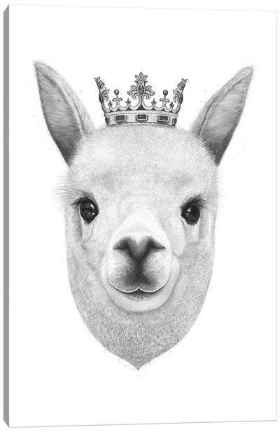 The King Llama Canvas Art Print