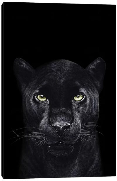 The Panther On Black Canvas Art Print