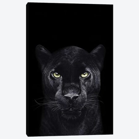 The Panther On Black Canvas Print #VAK70} by Valeriya Korenkova Canvas Art