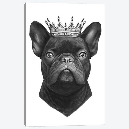 King French Bulldog Canvas Print #VAK8} by Valeriya Korenkova Canvas Wall Art