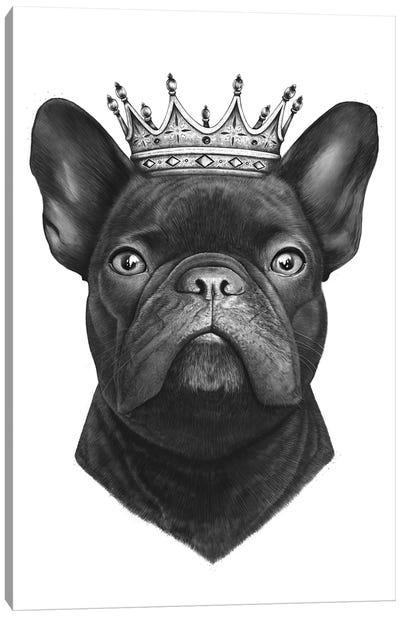 King French Bulldog Canvas Art Print
