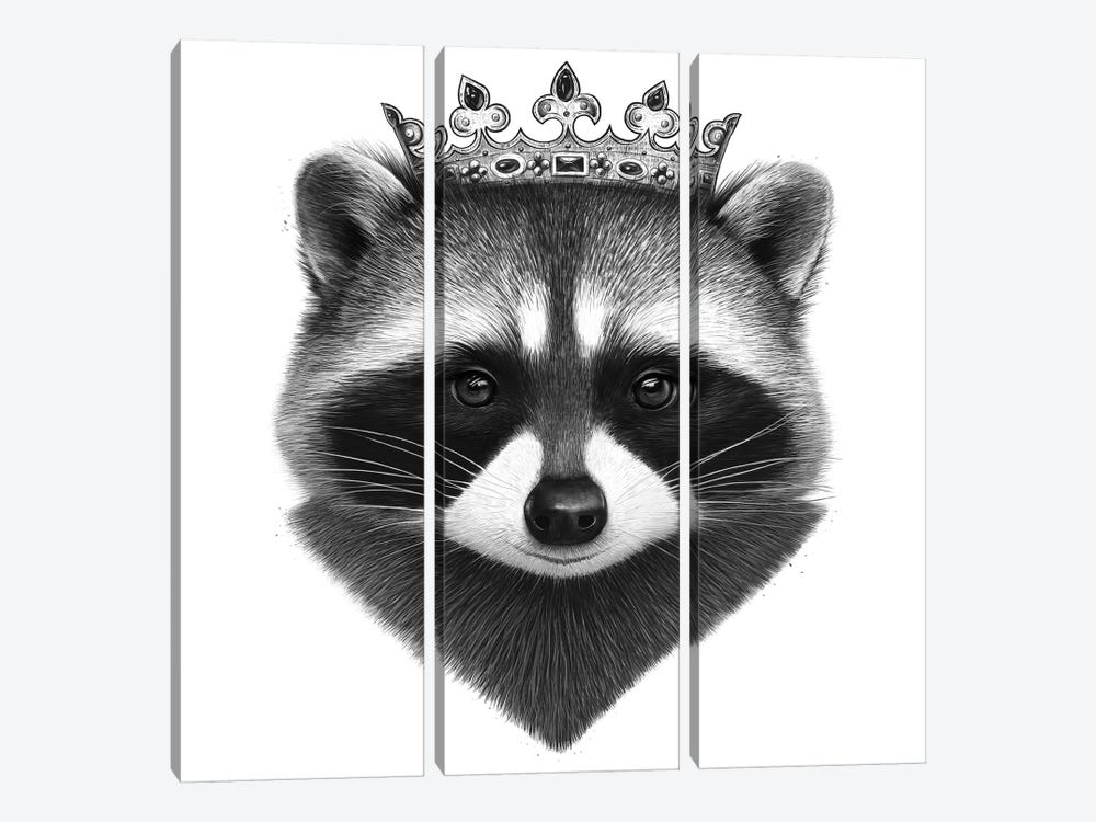 King Raccoon by Valeriya Korenkova 3-piece Canvas Art