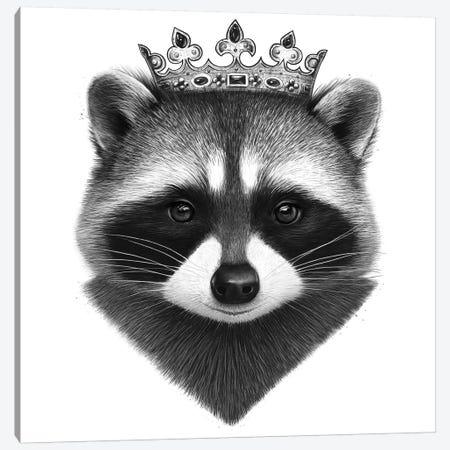King Raccoon Canvas Print #VAK9} by Valeriya Korenkova Canvas Artwork