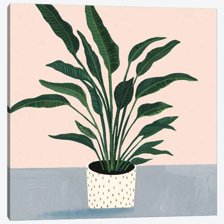 Houseplant IV Canvas Print #VBO142} by Victoria Borges Canvas Wall Art