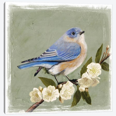 Bluebird Branch I Canvas Print #VBO19} by Victoria Borges Canvas Art