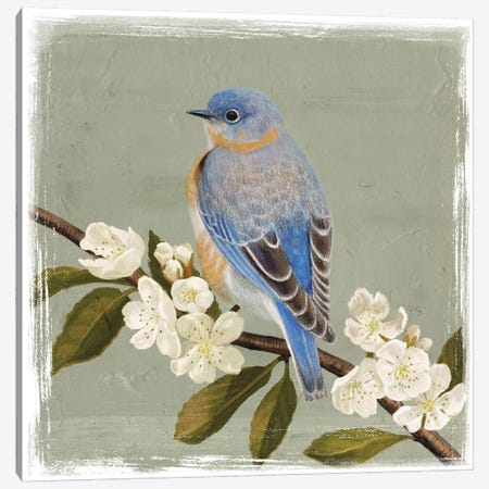 Bluebird Branch II Canvas Print #VBO20} by Victoria Borges Canvas Art Print