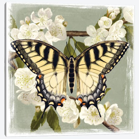 Butterfly Branch II Canvas Print #VBO22} by Victoria Borges Canvas Print