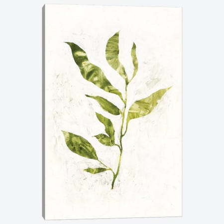 Sapling I Canvas Print #VBO255} by Victoria Borges Art Print