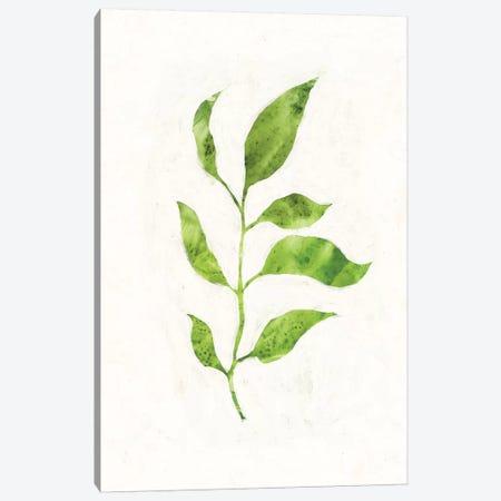Sapling II Canvas Print #VBO256} by Victoria Borges Art Print