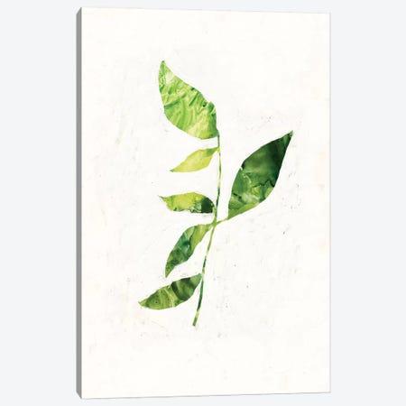 Sapling III Canvas Print #VBO257} by Victoria Borges Canvas Art Print