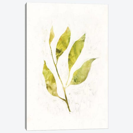Sapling IV Canvas Print #VBO258} by Victoria Borges Canvas Art